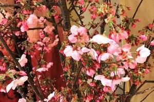 フラワーアレンジメントとは?生け花との違いや基本の作り方も紹介